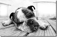 Lazy_Dog