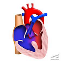 Cardiology rotation Max Notes icon