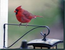 cardinalM lite 012009