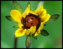 ladybug in flwr0510