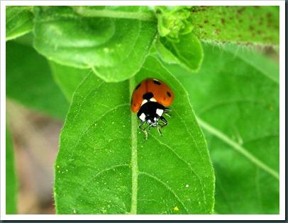 ladybug0510 (5)