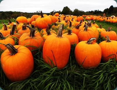 pumpkins1006 (6)