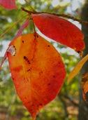 leaves103110 (8)