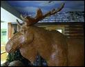 lenny moose (5)
