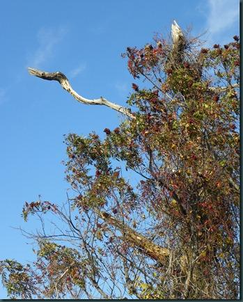 tree bird103110 (6)