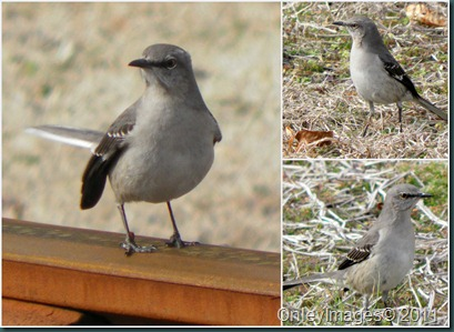 mockingbird collage1