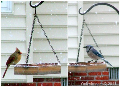 feeder collage0327
