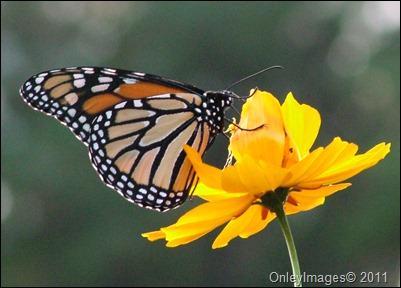 monarch1028 (3)