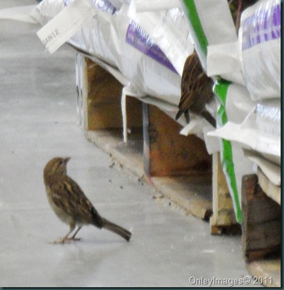 lowes birds031311 (3)