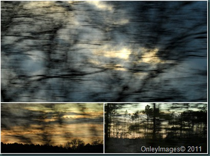 0402 trees collage