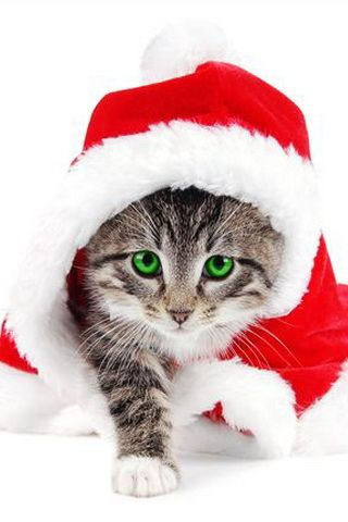 Cute Cat Santa Costumes iPhone Wallpaper
