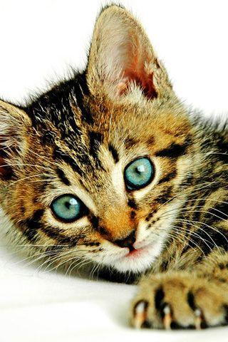 Cute Cat Picture iPhone Wallpaper