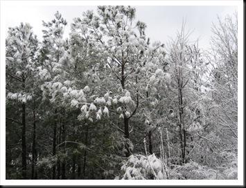 2009 snow 016