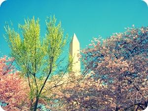 washington monument 4-9-05 Cherry blossom festivalcopy