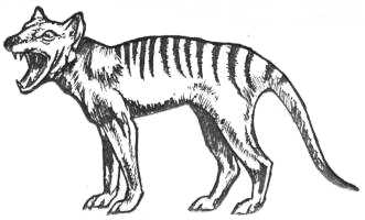 Thylacine, by Michael Connolly