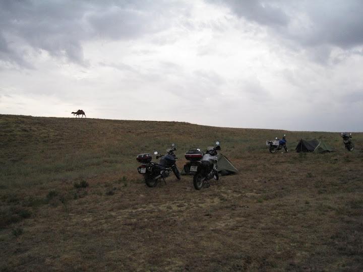 Верблюд и наш лагерь