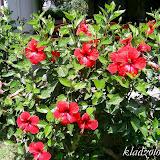 Турция, цветы