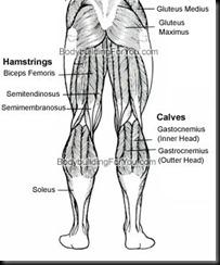 leg-muscle-back