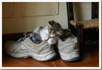 La Guerra delle scarpe 2