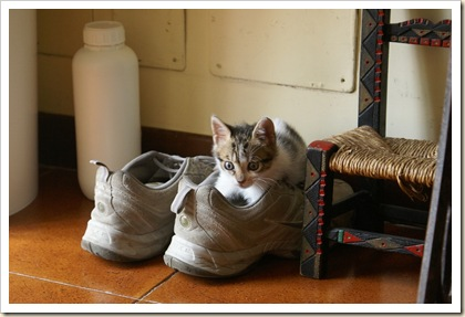 La Guerra delle scarpe 1