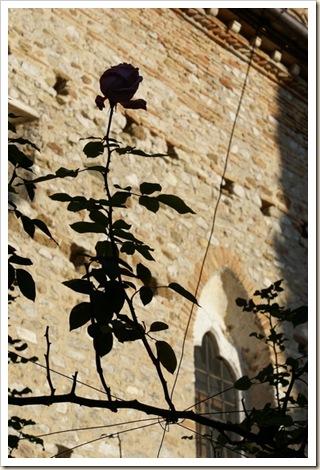 008 - Una Rosa