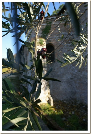 014 - Altre Olive