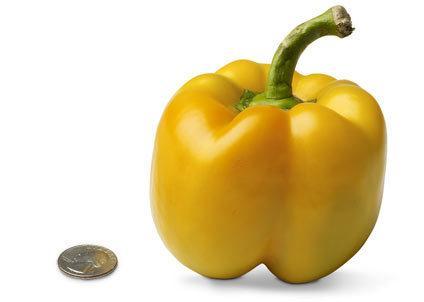 18-bell-pepper.jpg