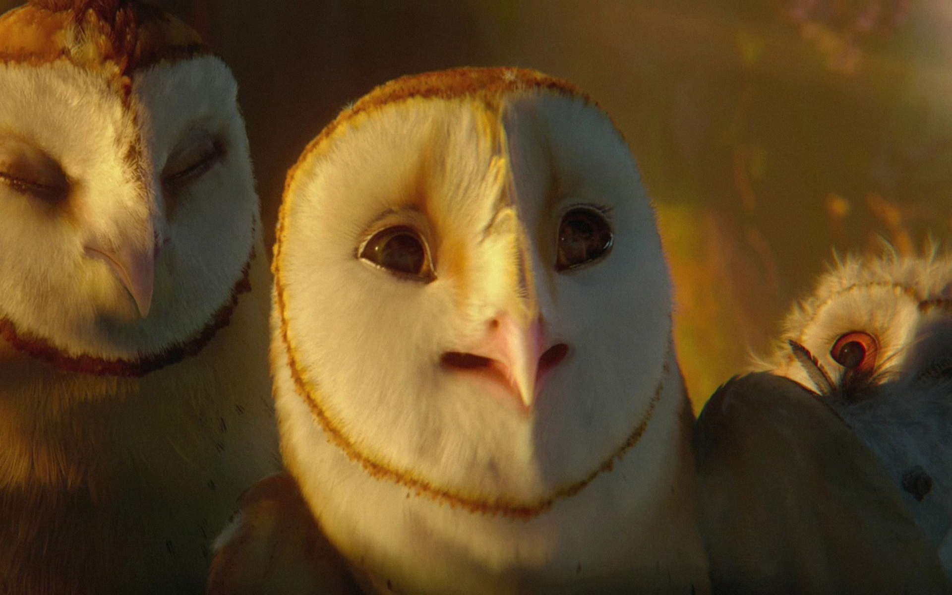 Beautiful   Wallpaper Home Screen Owl - legend-of-the-guardians-068%28www  Collection_909126.jpg