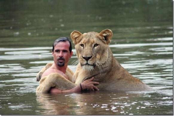 lion_human