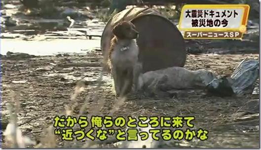 dog_guard_dog