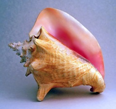 Conch - www.creativebeasts.com/