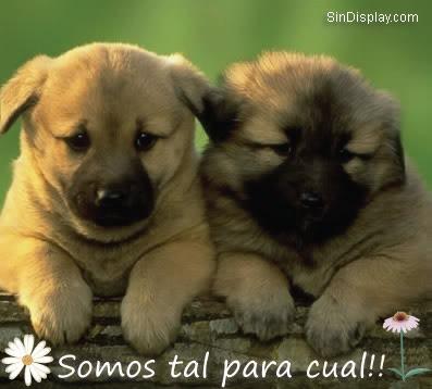 dos perros que se aman, imñagenes con frases de amor