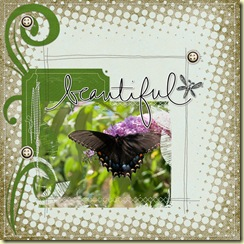 2009-8-8-DDBeautiful-butterfly