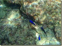 caletacandeleroschicoPC040267