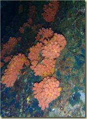 caletacandeleroschicoPC040268