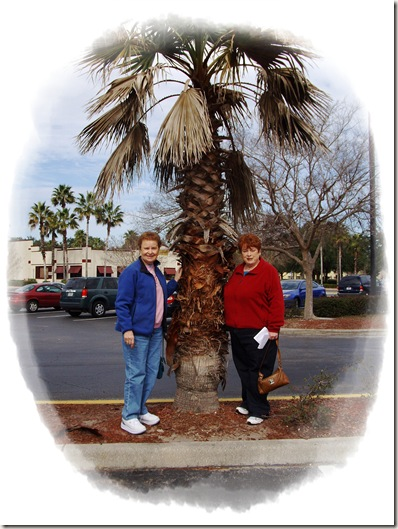 lisa.joan.palm tree