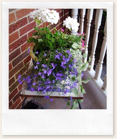 herb garden june09 016