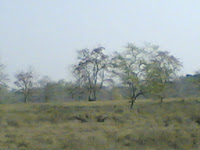 Kanha Meadow6.jpg