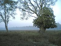 Kanha Meadow8.jpg