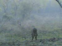 Kanha Wild Boar2.jpg