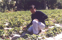 Mahabaleshwar Strawberry Farm.jpg