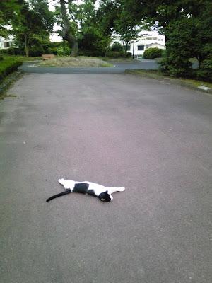 噂の猫スポット