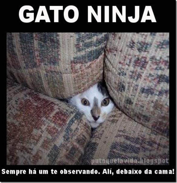 ninja1111