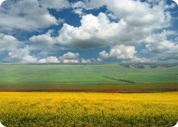 Тысячу рублей за каждый гектар