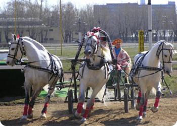 В Твери пройдет чемпионат по русским тройкам