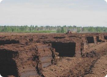 В Тверской области торф станет по-настоящему ПОЛЕЗНЫМ ископаемым
