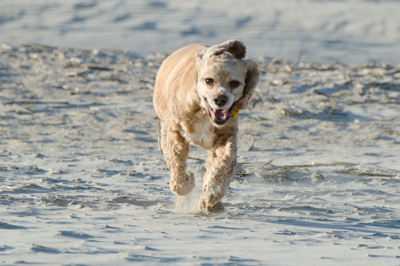 Chewy running