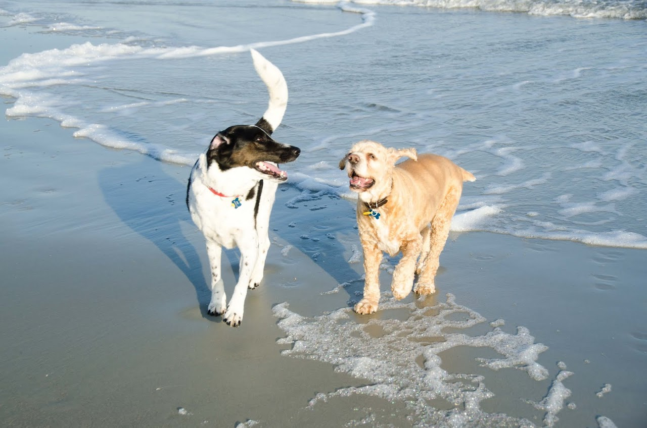 Chewy and Abby on the beach