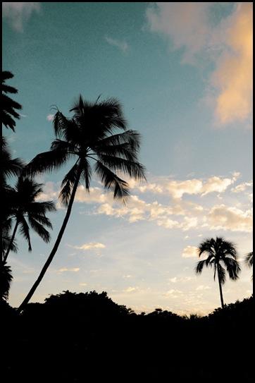 palmskyweb