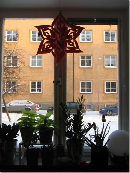 julstjärnan